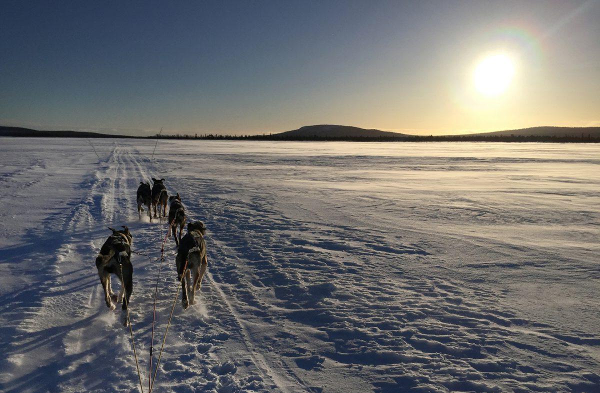 Hundspann på isen