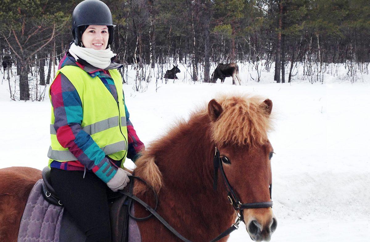 Ryttare, häst, älgar